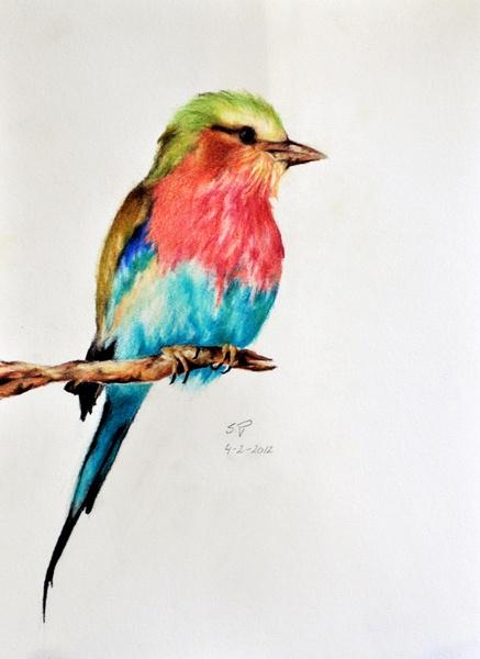 Exotic Bird 5 - Original Coloured pencil drawing