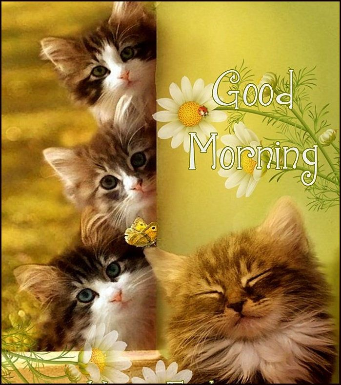 Cute Cats And Kittens Good Morning Quote Good Morning Cat Morning Cat Good Morning Greeting Cards