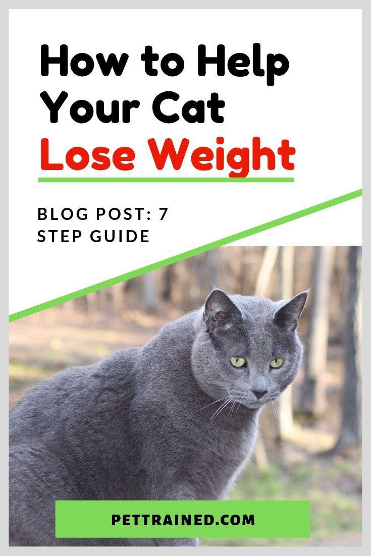 b04d59e281772d074e47bb1e64cc143a - How To Get My House Cat To Lose Weight