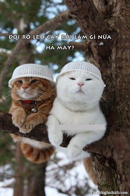 Khó đỡ với ảnh động vật ngộ nghĩnh, hài hước • Hình Ảnh ...