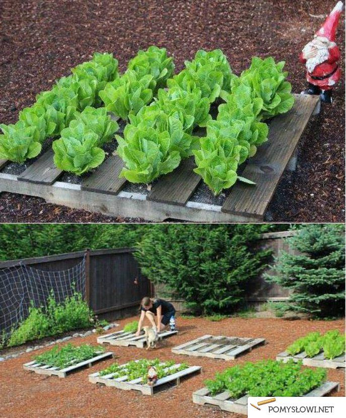 Pallet Garden (couldn't find the original how-to's but looks fairly simple enough)