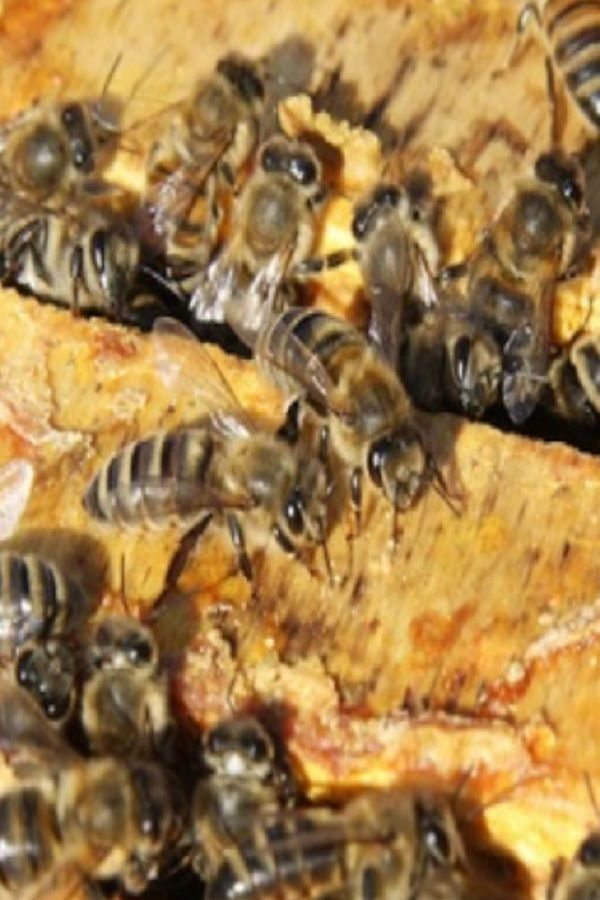 b04e63a6910ee8953835957d405bdb67 - How To Get Rid Of Bee Hive In Attic
