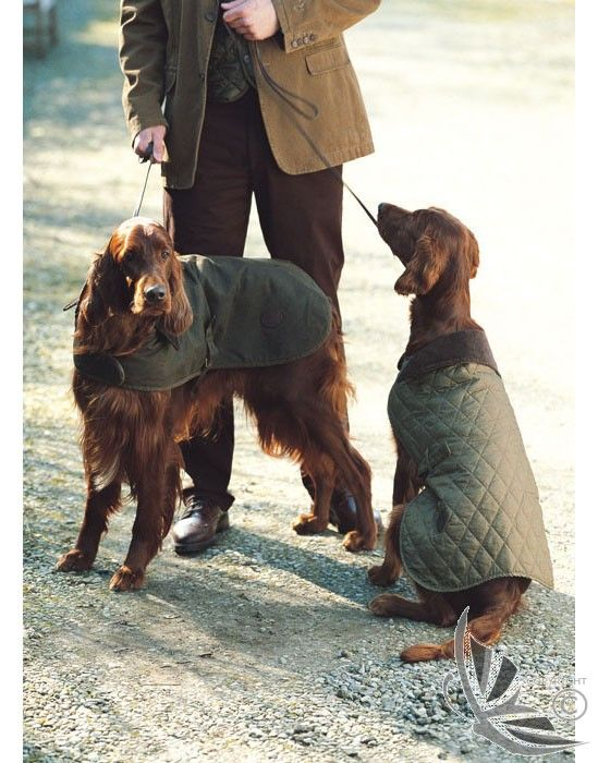 Barbour Wax Dog Coat - Olive UAC0005OL71 (A1101) at Country Attire