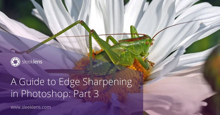 A Guide to Edge Sharpening in Adobe Photoshop