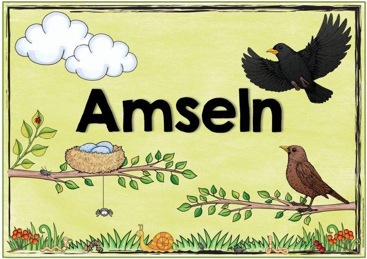 """Ideenreise: Themenplakat """"Amseln"""""""