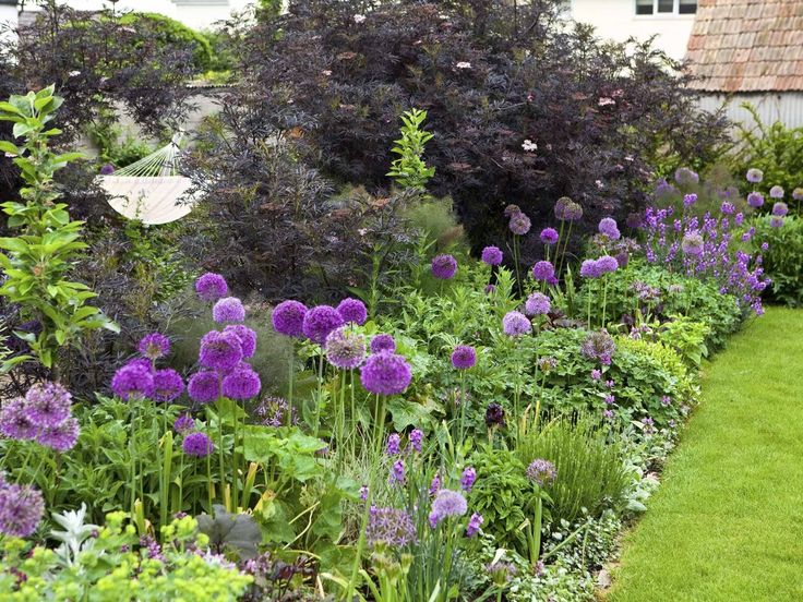 Border with alliums and Sambucus 'Black Lace' - part of a family garden featured on intoGardens (into-gardens.com)