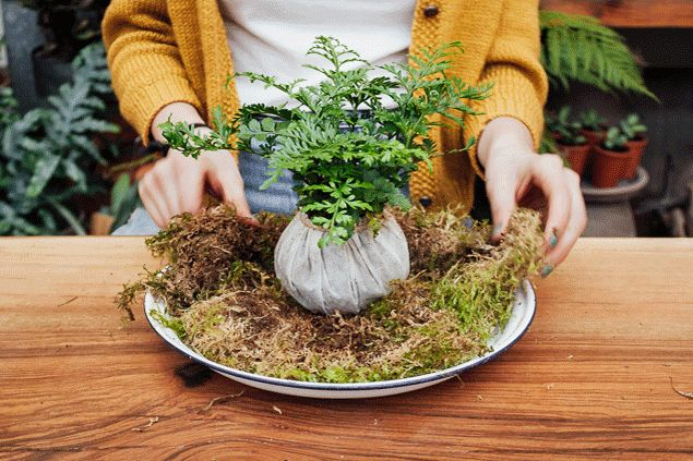 How to make a kokedama - Kokedama kit - Pistils Nursery