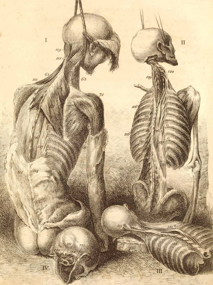 """Engravings of the bones, muscles, and joints, illustrating the first volume of the Anatomy of the Human Body. 2d ed.    London, 1804. Etching. National Library of Medicine.    John Bell  (1763-1820)  [anatomist; artist]    Bell criticized """"the subjection of true anatomical drawing to the capricious interference of the artist, whose rule it has too often been to make all beautiful and smooth, leaving no harshness…."""" His own drawings and etchings are notably harsh."""