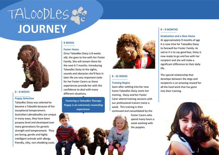 Have you heart of Taloodles? They are assistance and therapy Labradoodles that provide therapy dogs for disabled children. They do great work. Please support them by following them on Facebook.