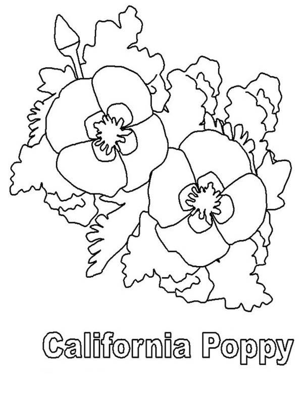 California Poppy California Poppy Picture Coloring Page