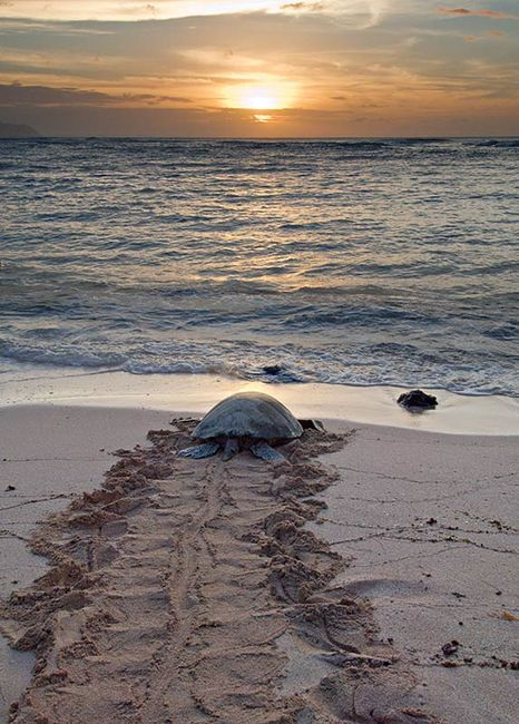 Soon the day will come to an end and then I can rest in You, O Lord of my life!  Beach.  Sea Turtle.  Ocean