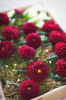 Red Dahlia... Love this color for centerpieces