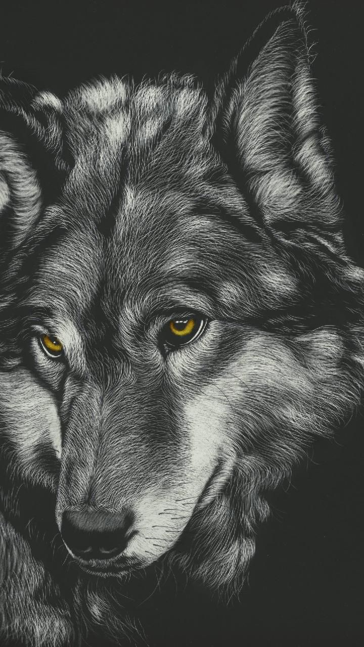 Download Wolf Wallpaper By Georgekev Now Browse Millions Of Popular Animal Wallpapers And Ringtones On Wolf Wallpaper Wolf Painting Animal Totem Spirit Guides