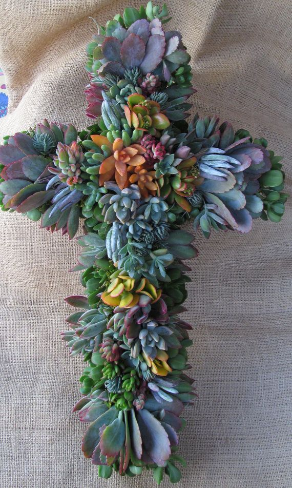 Hey, I found this really awesome Etsy listing at https://www.etsy.com/listing/158922649/succulents-make-up-this-lovely-living