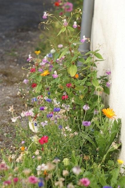 wildflowers by wood & wool stool, via Flickr