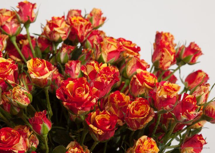 www.FreshCutFlowers.ru online заказ# доставка курьером# просто цветы# подарок девушке# послать цветы# Ваш поставщик свежих цветов.