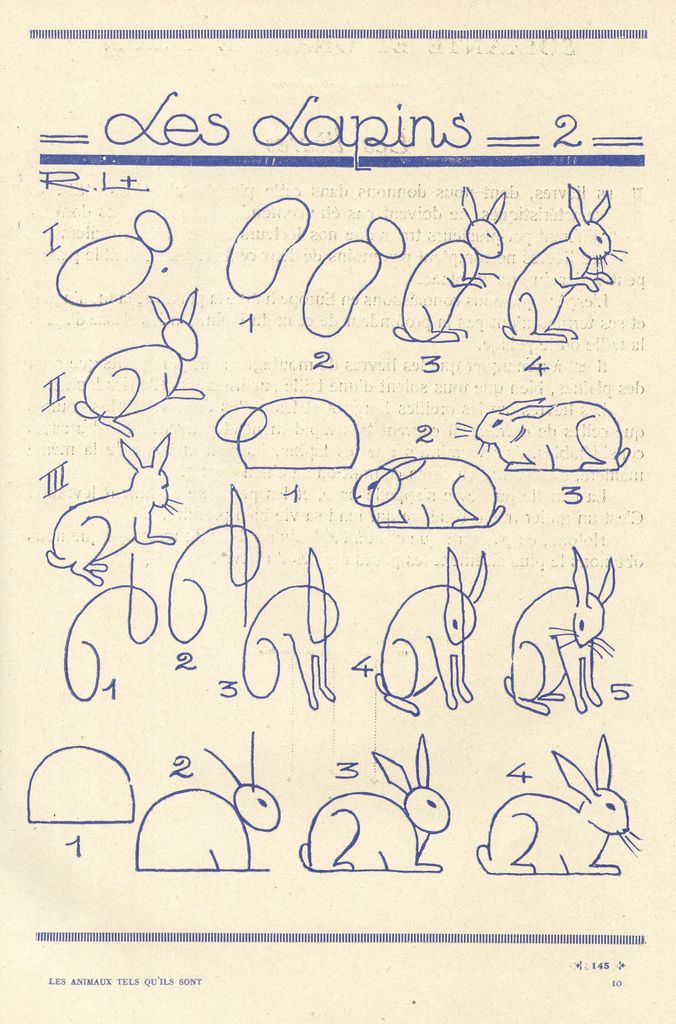 How to draw bunnies - french art tutorial