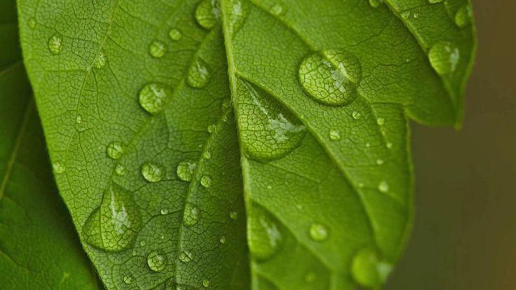 Cendrine Marrouat Photography: Droplets
