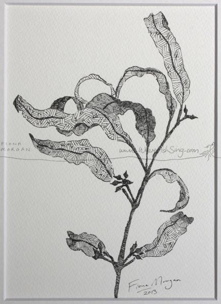 GUMLEAVES Nature Illustration ORIGINAL Matted by WhereFishSing, $32.00