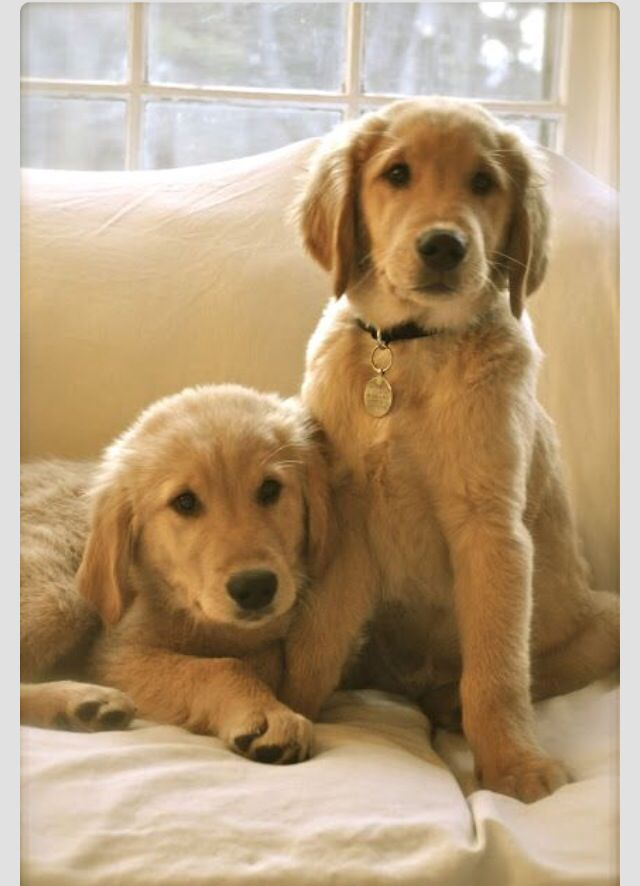 Cuties! | My Favorite Dogs | Pinterest