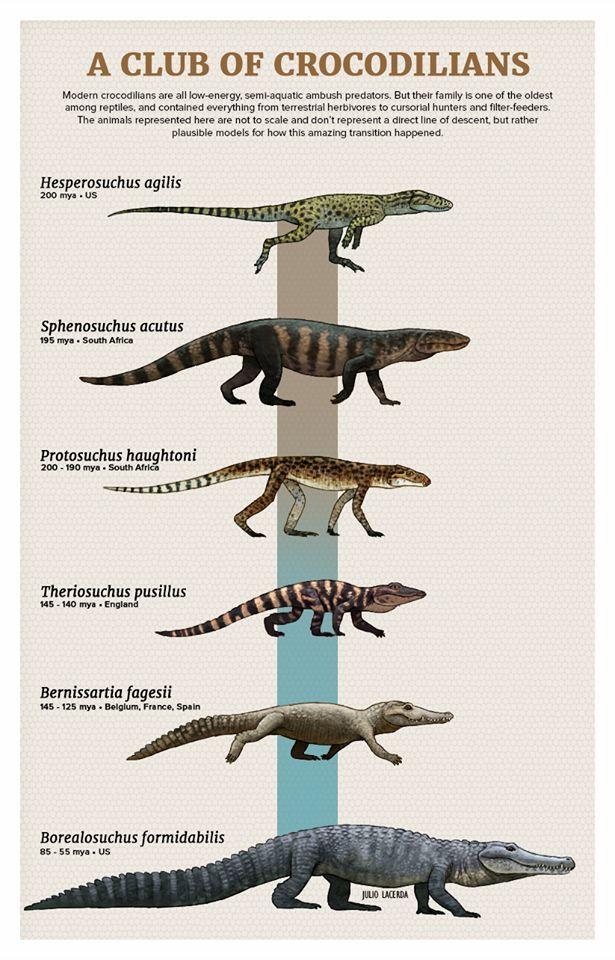 2b63af998 Crocodile Evolution