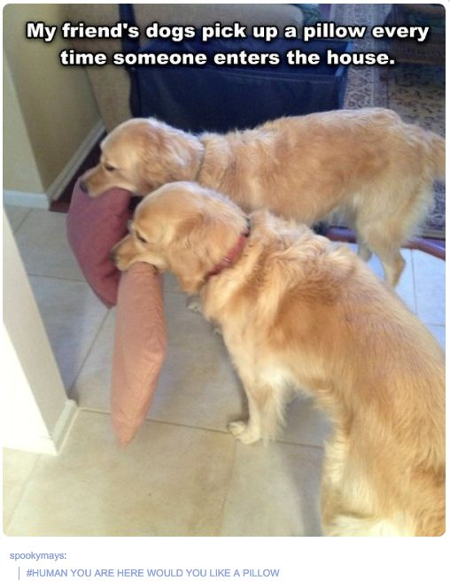 37 Times Tumblr Told The Truth About Dogs. omg the last one on the list!