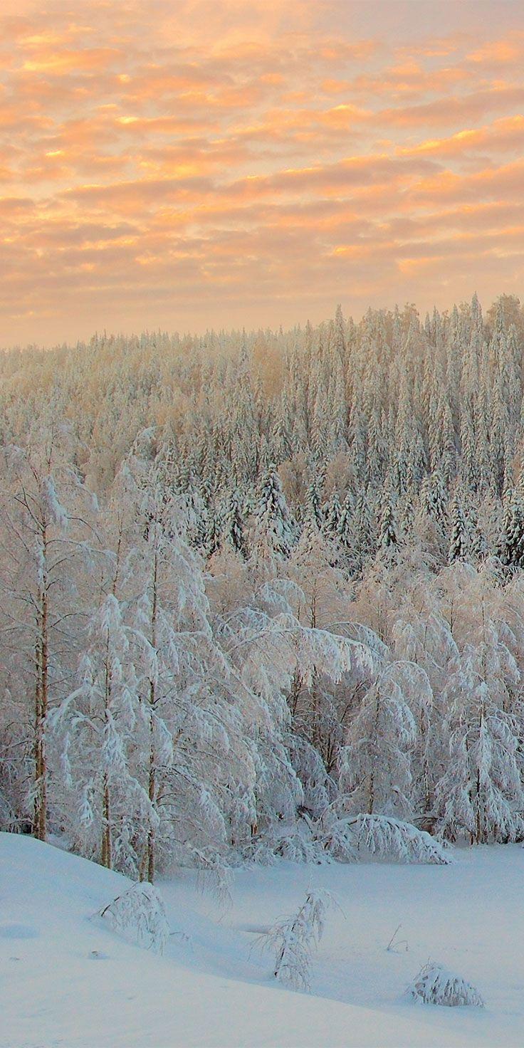 A magical winter wonderland in Lapland, Finland.