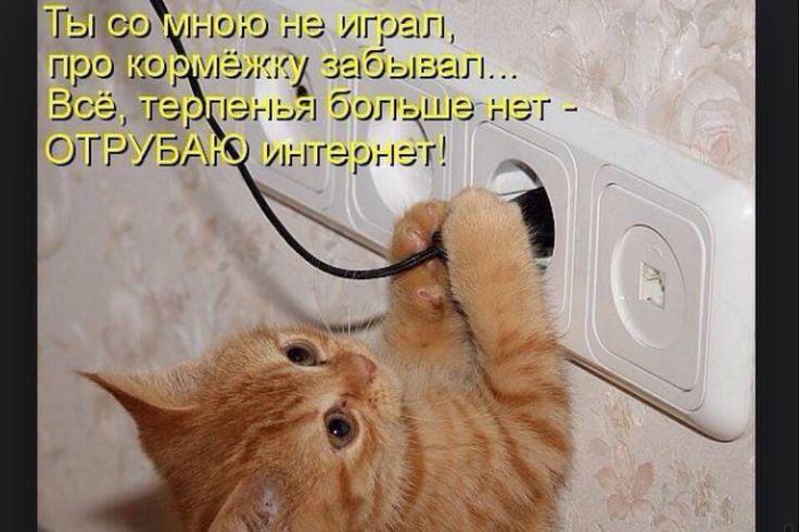 Кот которого достало всё