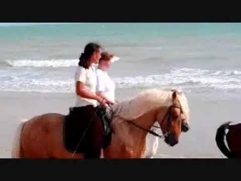 Reiterferien am Meer in Tunesien ( Djerba / Zarzis )