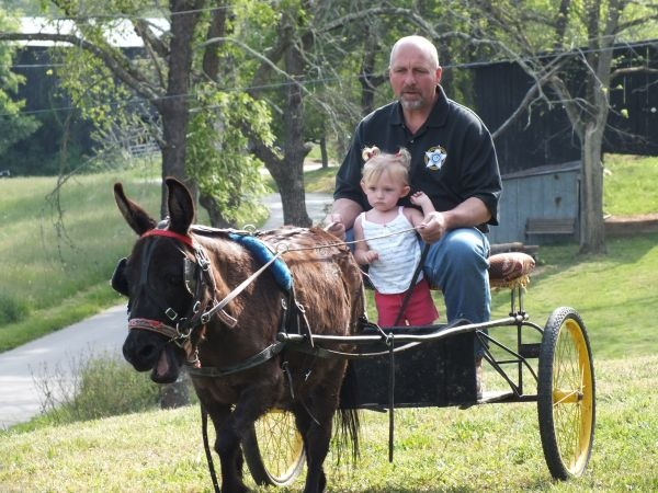 Animals Pulling Wagon : Best images about animals that can pull a wagon or