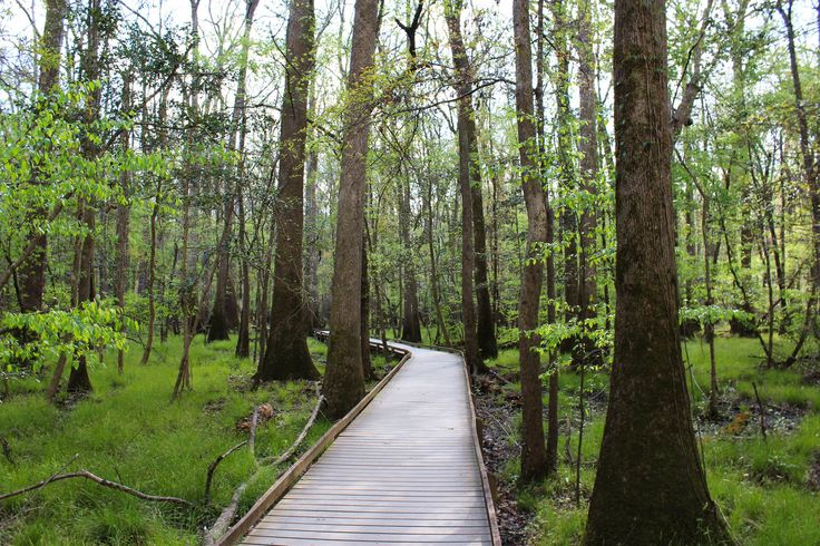 Congaree National Park — Fashion and Fernweh