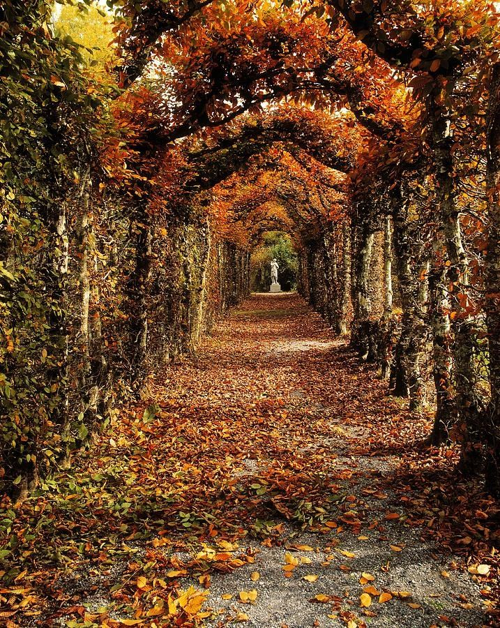 Autumn at Birr Castle - Cuirge Midhe, Offaly, Ireland