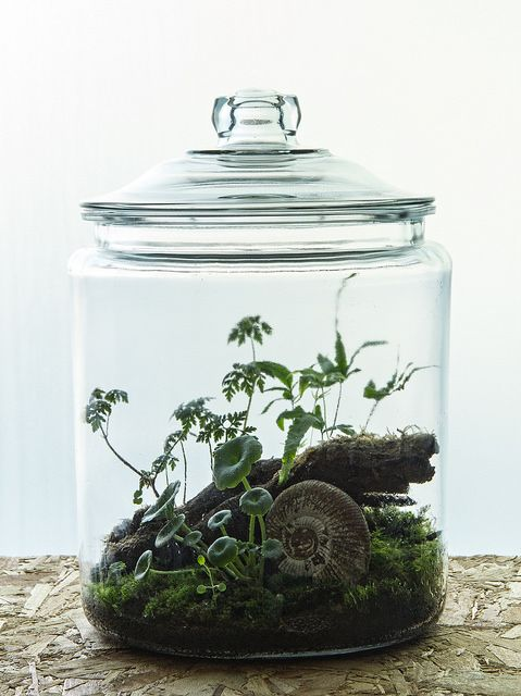 "Ken Marten ""Darwin"" terrarium, with ammonite, ferns and moss. (I just love these. Plants in beautiful glass objects. One day I will have these all over the place.)"
