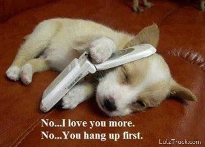 Sweet Puppy on The Cell Phone: Animals, Dogs, So Cute, Pets, Puppys, Funny, Adorable, Things