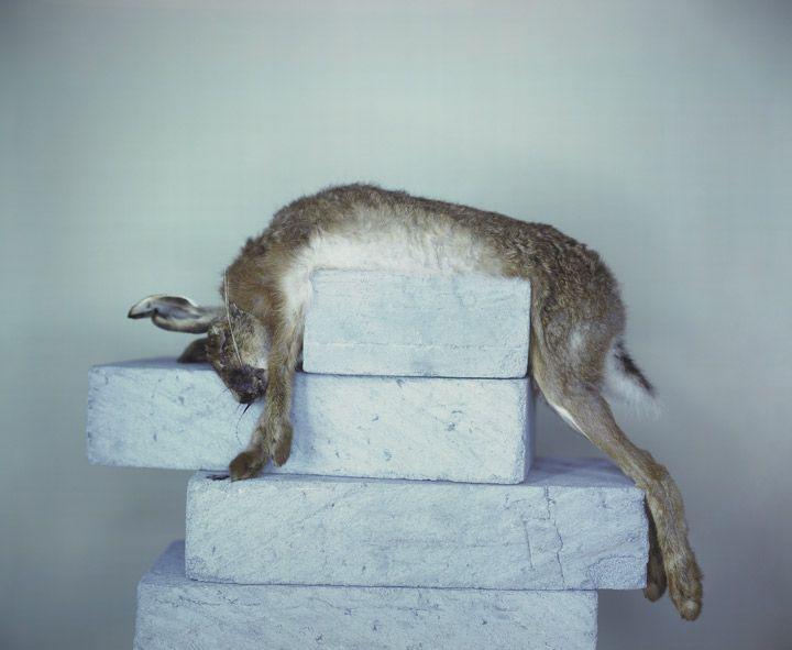 Richard Learoyd, Breeze Blocks with Hare, 2007