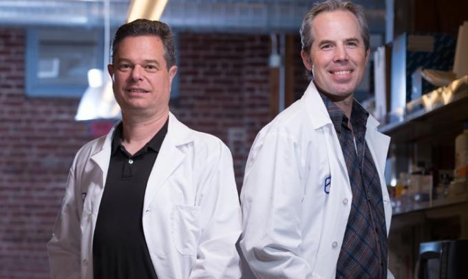 """""""Hemos encontrado que este compuesto tiene un efecto específico en las células cancerosas metastásicas, células tumorales muy agresivas"""", dice un investigador"""