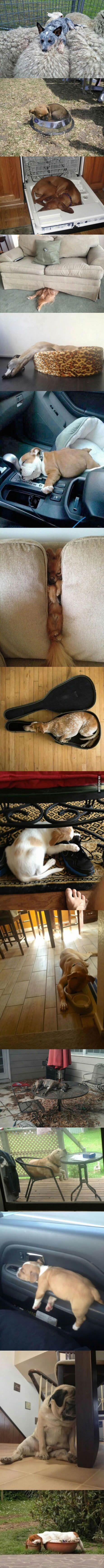 15 photos that prove dogs can  asleep anywhere. http://lolsalot.com/15-photos-that-prove-dogs-can-fell-asleep-anywhere/ #Funny #Pic