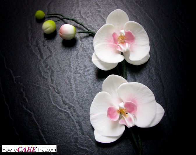 Learn how to make a gum paste sugar moth orchid flower, and also a trailing branch of orchid flowers in this easy to follow free photo tutorial!