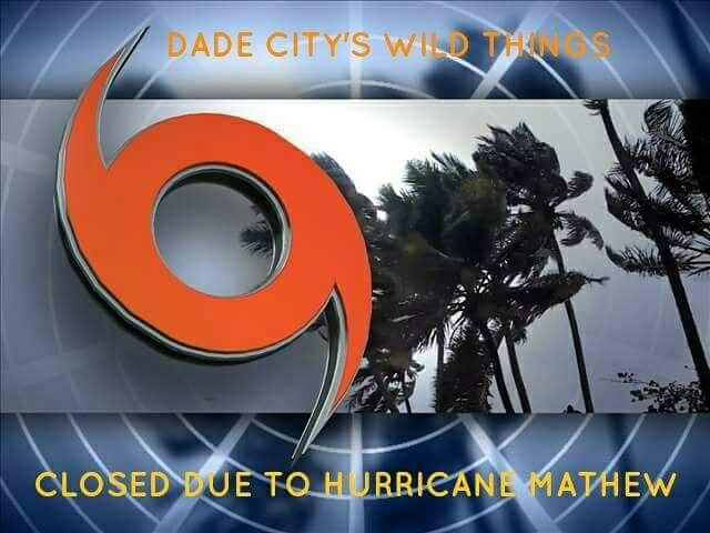 Dade City's Wild Things has made the decision to close the ZOO to the public on Friday 10/7/16 (reopen Sat 10/8/16) so that the focus on our Animals needs can be our priority.    Prayers for all in its path.  Everyone be safe and we hope to see you Saturday at the Zoo. #hurricanematthew #closed