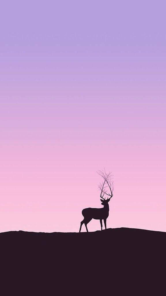 o avcılar kaçağı firuze geyik