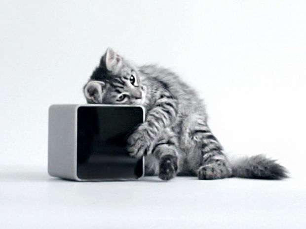 Cat away from cat: With the Petcube, your furry little friend is only as far as your phone