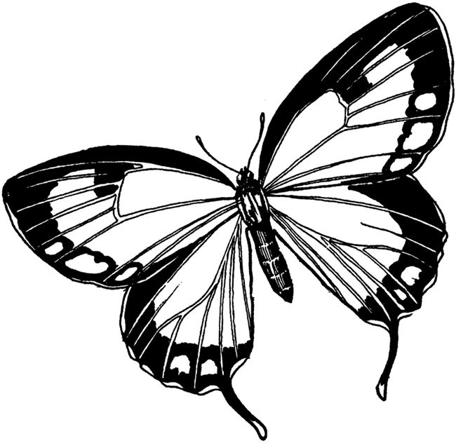 226 Best Images About Butterfly On Pinterest