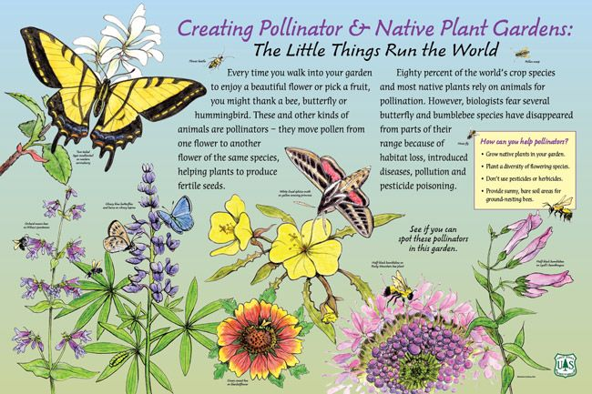 1000 Images About The Rosalynn Carter Butterfly Trail On 400 x 300