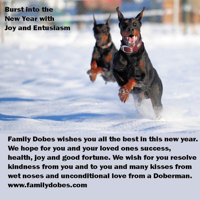 Best Doberman Breeder contact information