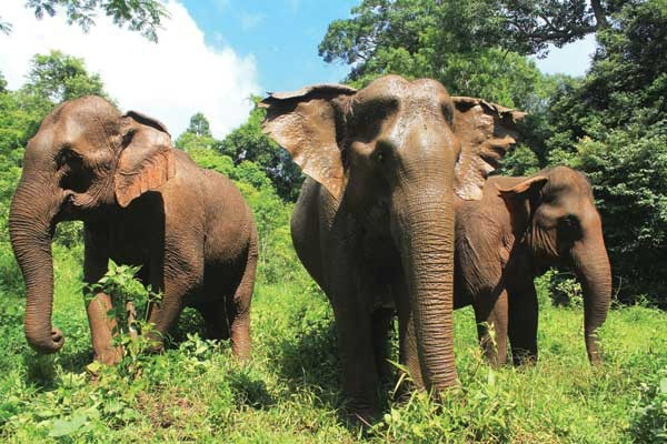 Rescued elephants at the Elephant Valley Project
