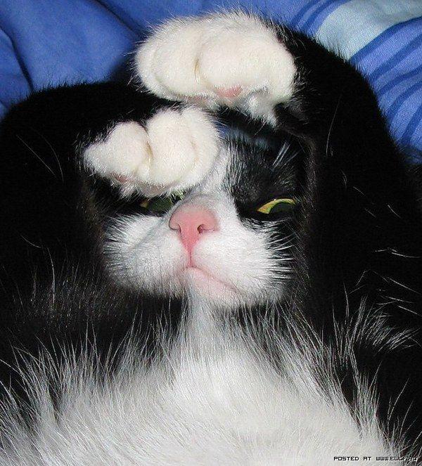 Красивые фотографии кошек (38 фото)