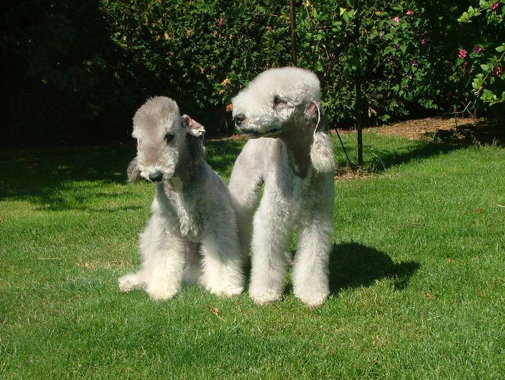Online Dog Training - Dog Training Guide - Best Online Dog Training Avai...