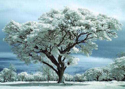 #ImDreamingOf A white Christmas @Radley London