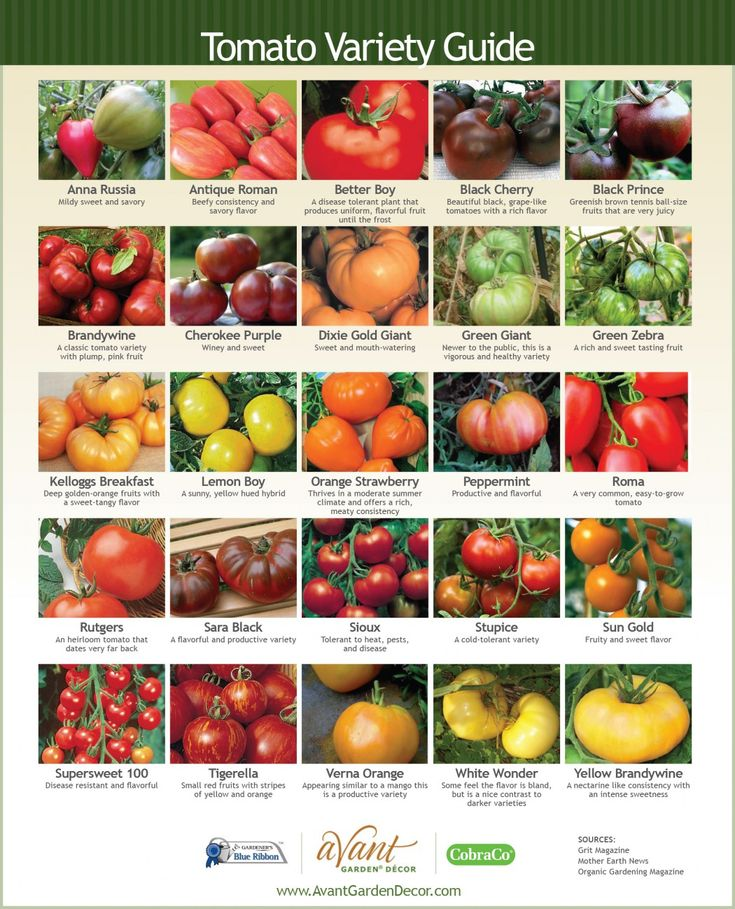An explanation of a few types of tomatoes, how to plant and grow them, and tips for the best harvest.