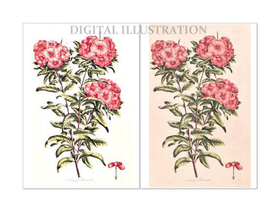 Antique Flower Digital Antique Illustration Flower by BiSew